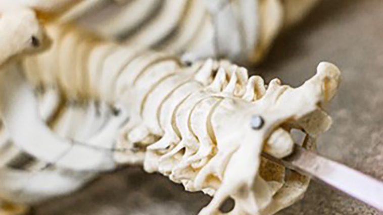 Long-term spinal injury